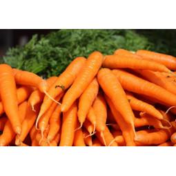zanahorias extra