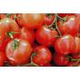 tomates rama