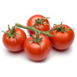 tomate rama