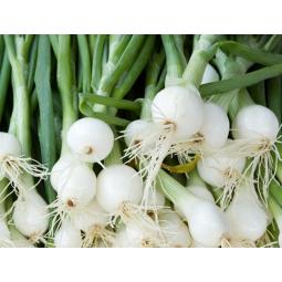 cebolletas blancas