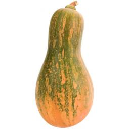 calabaza carruecano